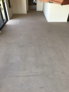 Carpet clean after
